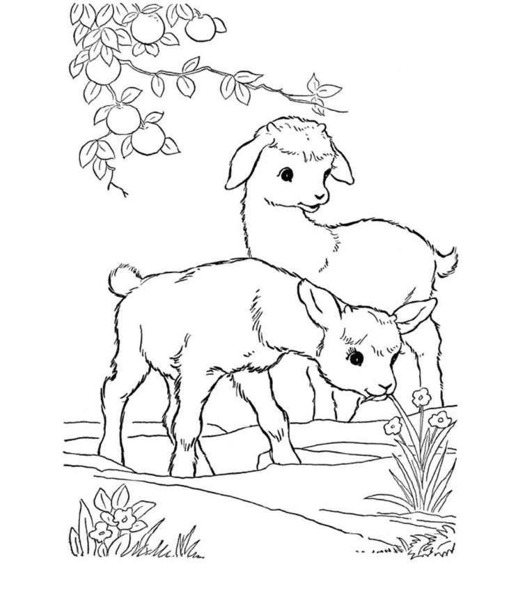 Tổng hợp những bức tranh tô màu con dê vui nhộn nhất dành cho các bé