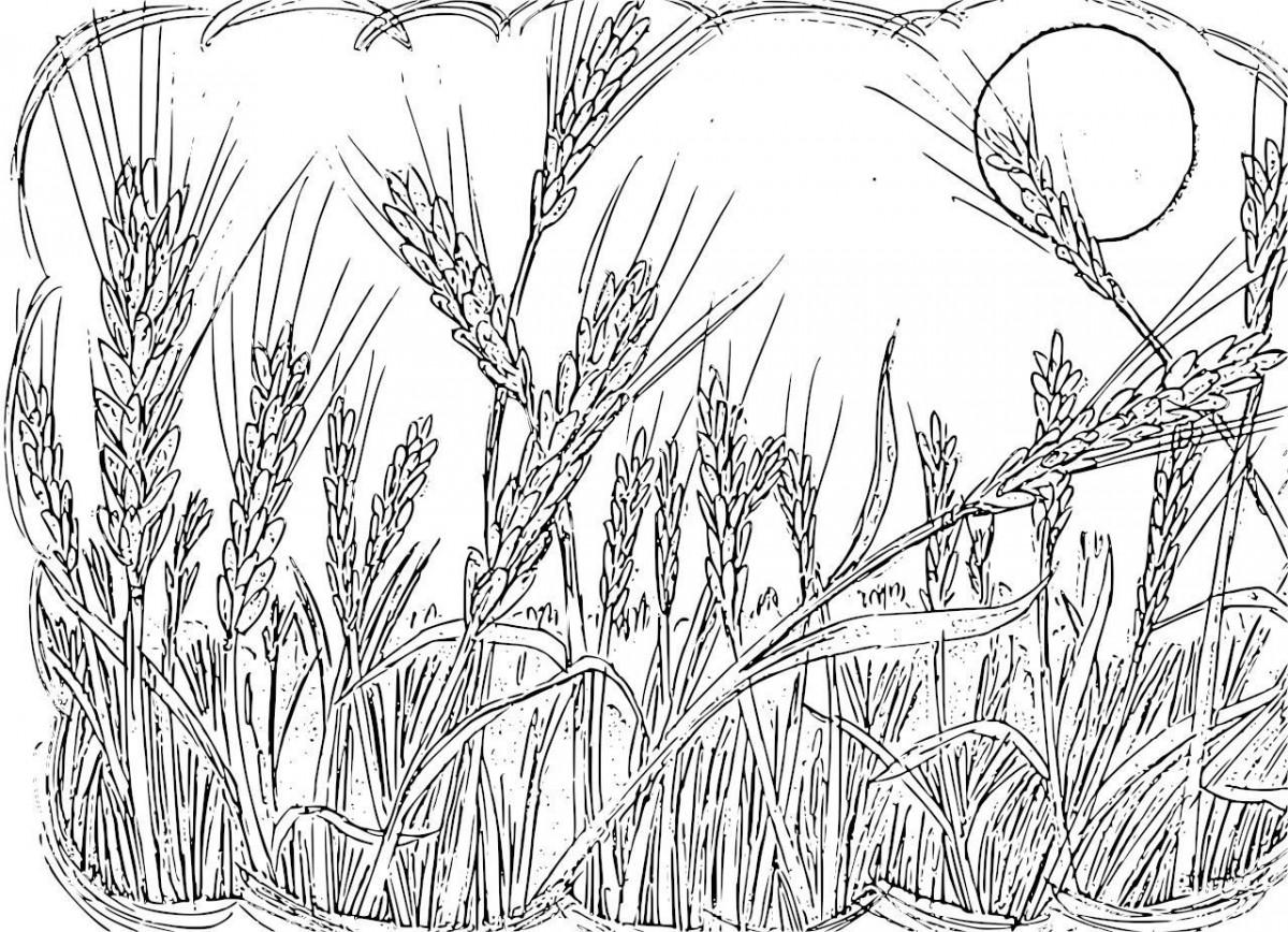 Tổng hợp tranh tô màu cánh đồng lúa đẹp nhất cho bé