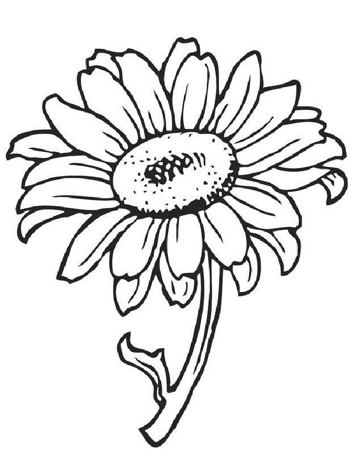 Bộ sưu tập tranh tô màu hoa đồng tiền đẹp nhất cho bé
