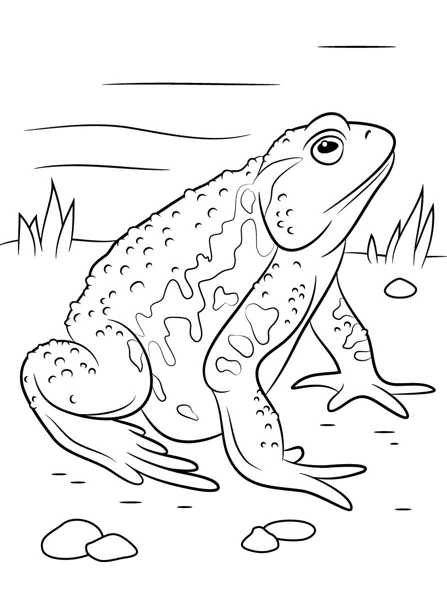 Tổng hợp những bức tranh tô màu con ếch đẹp nhất cho bé