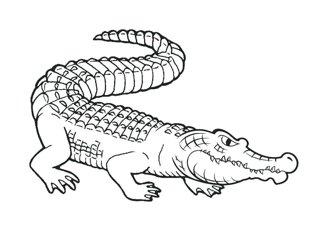 Tổng hợp tranh tô màu con cá sấu cho bé tập tô
