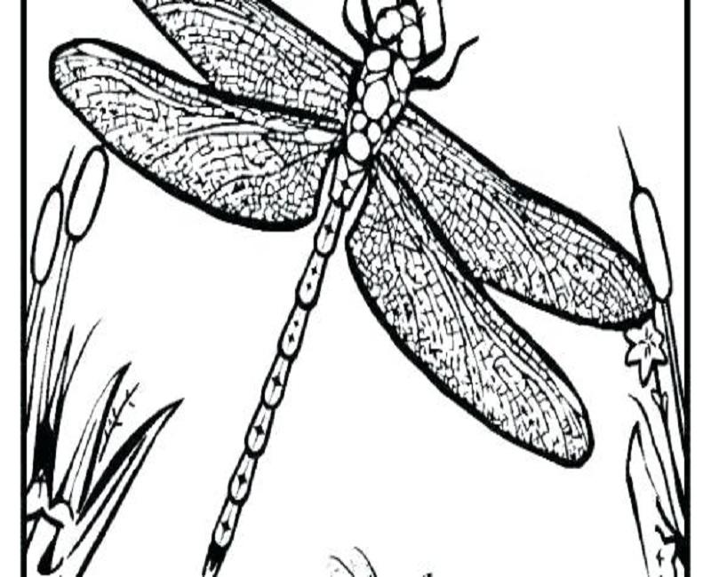 Tổng hợp tranh tô màu chuồn chuồn đẹp nhất cho bé