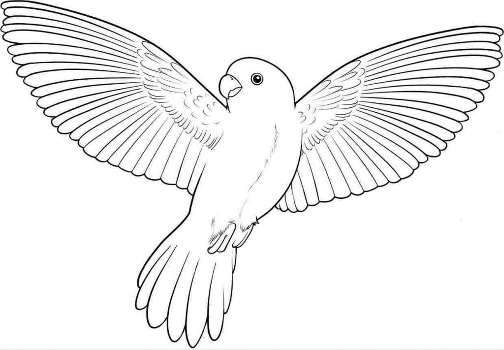 tranh-tô-màu-chim-chim