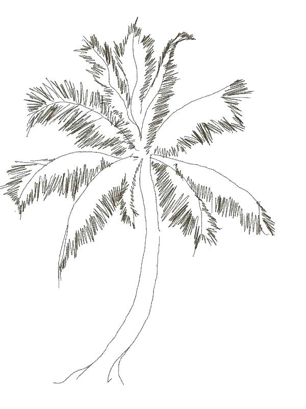 Tổng hợp những bức tranh tô màu đẹp nhất về cây dừa cho bé