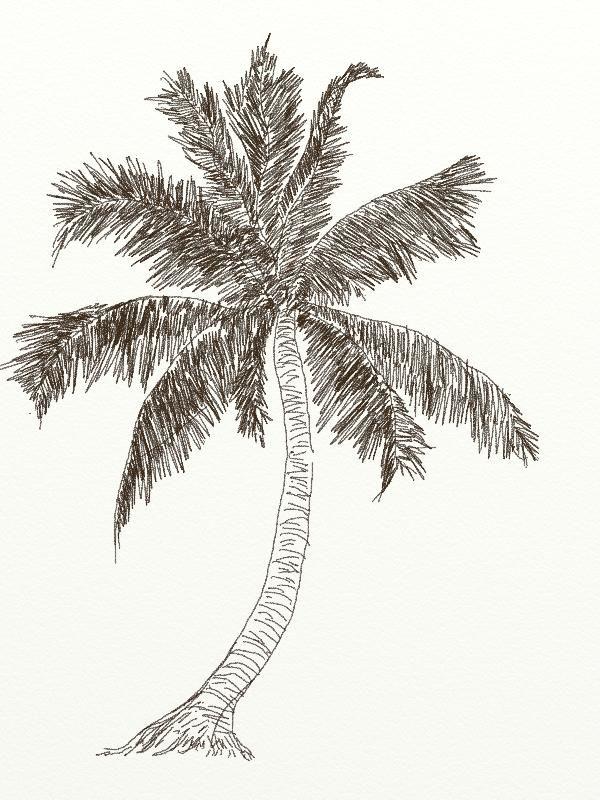 Tổng hợp những bức tranh tô màu cây dừa cho bé đẹp nhất