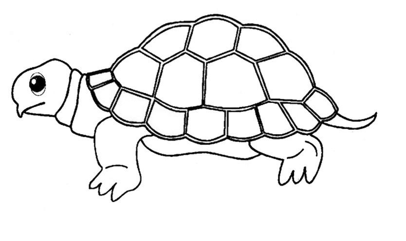 Tổng hợp những bức tranh tô màu đẹp nhất về rùa con