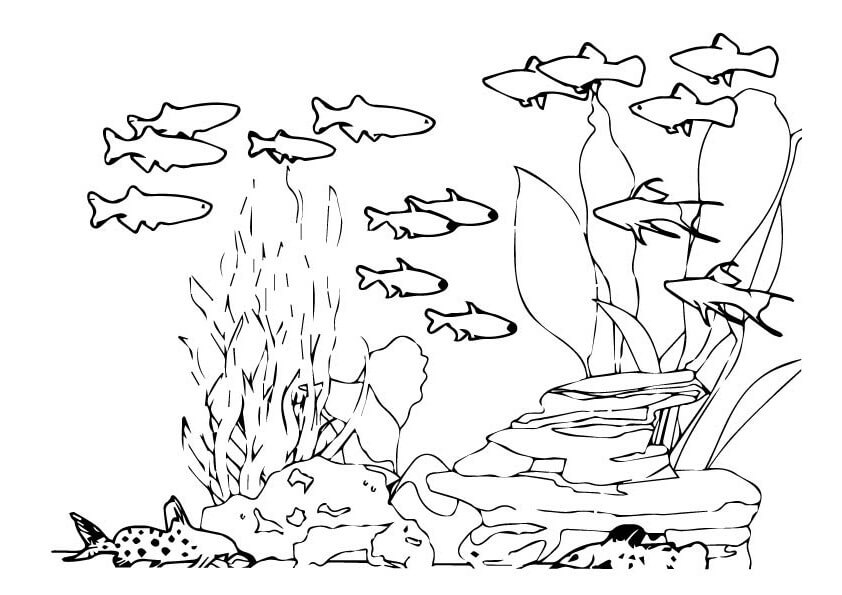 Tổng hợp tranh tô màu các con vật sống dưới nước