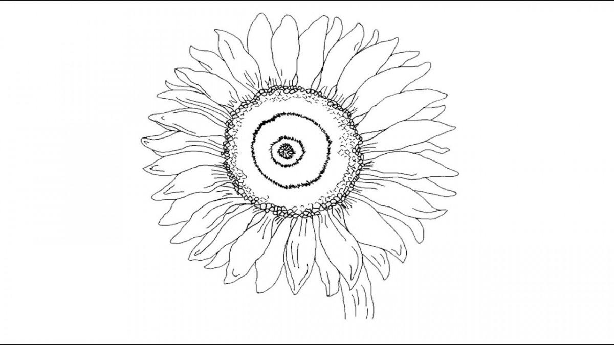 345+ Tranh tô màu các loài hoa đẹp cho bé tập tô màu - Tranh Tô Màu cho bé