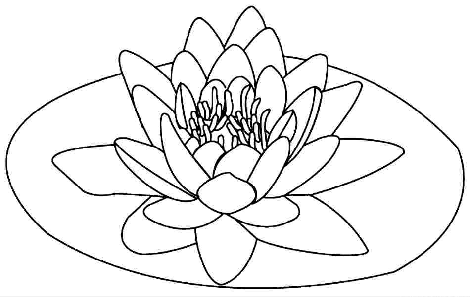 -to-be-flower-flower-color-border-color-to-be-11