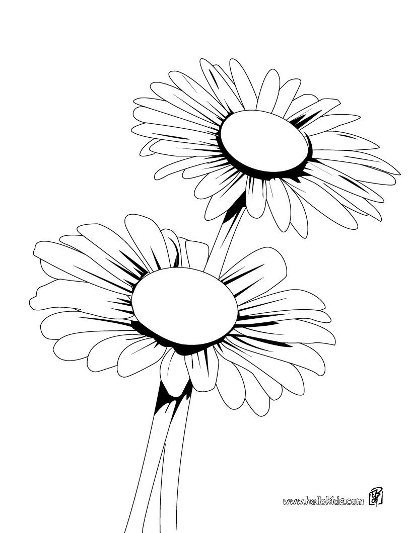 Tổng hợp những bức tranh tô màu hoa cúc ý nghĩa nhất cho bé