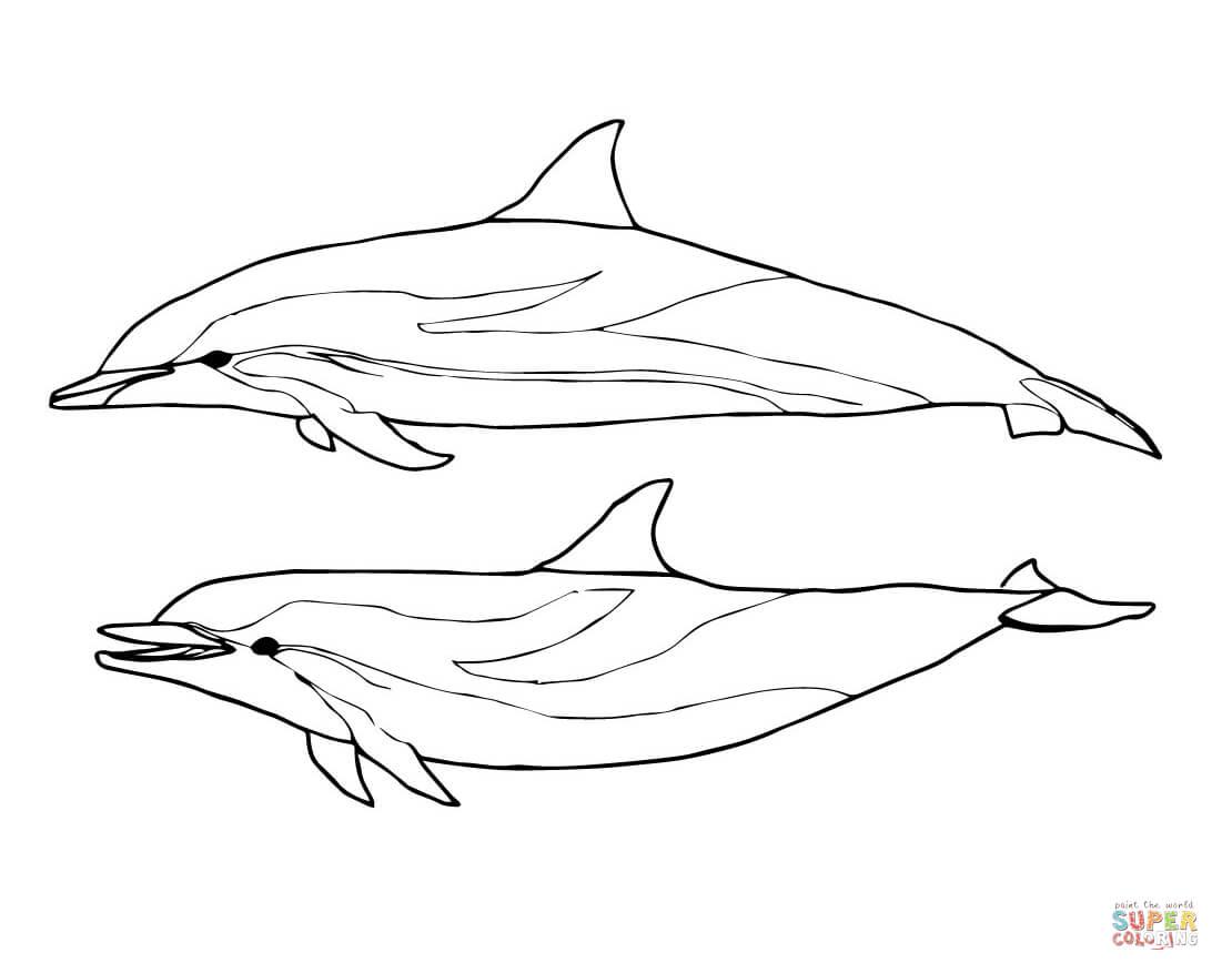 Tuyển tập tranh tô màu con cá heo đẹp nhất cho bé