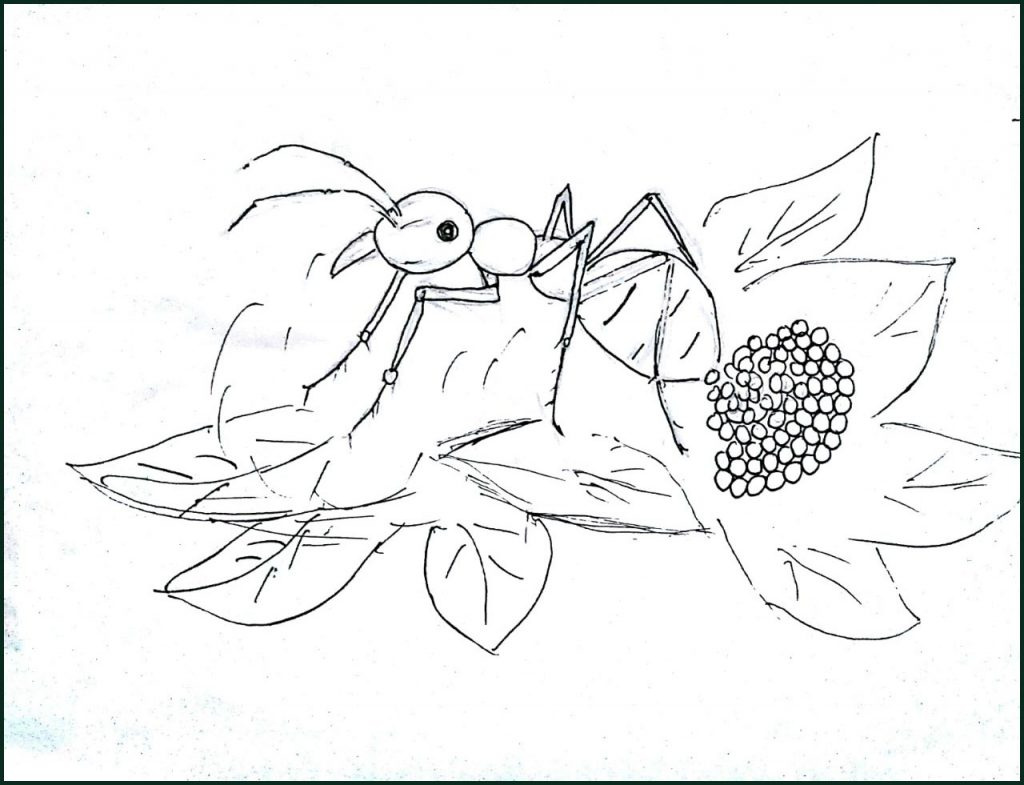 Tổng hợp những bức tranh tô màu đẹp nhất cho bé kiến