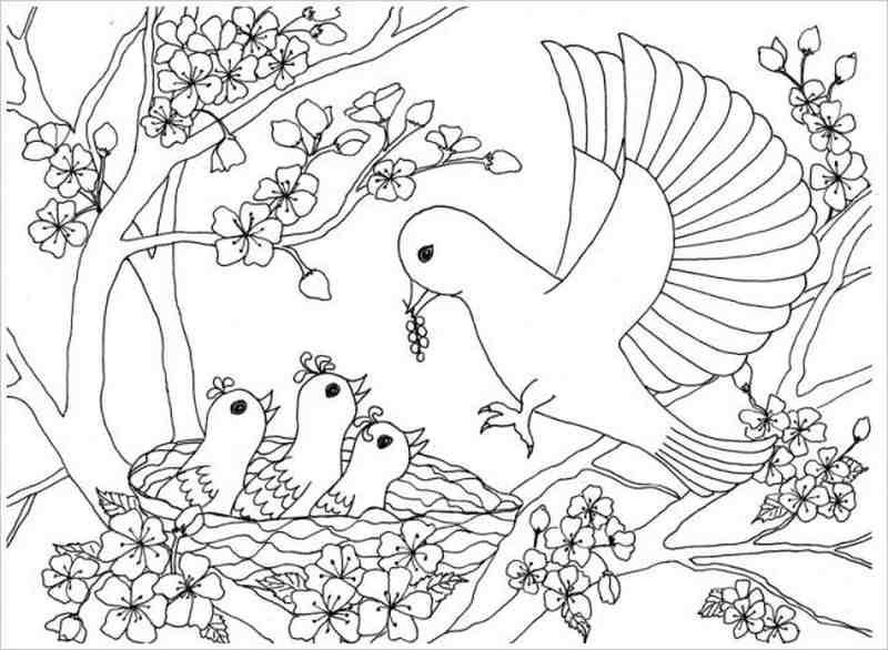 Tuyển tập những bức tranh tô màu con chim hay nhất cho bé yêu của bạn