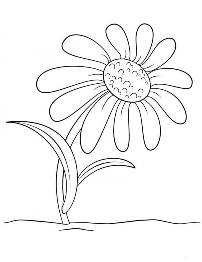 Tuyển tập tranh tô màu hoa hướng dương đẹp nhất